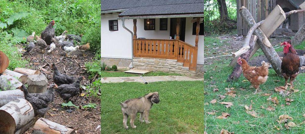 adelaparvu.com despre casa traditionala Stefesti, Romania, casa traditional romaneasca  (2)