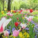 adelaparvu.com despre simbolistica florilor 7