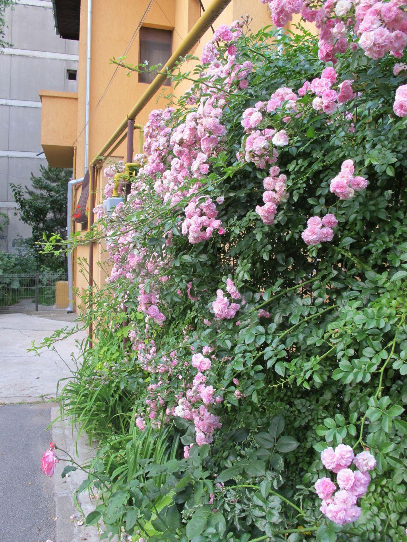 adelaparvu.com despre gradini urbane in Bucuresti 1