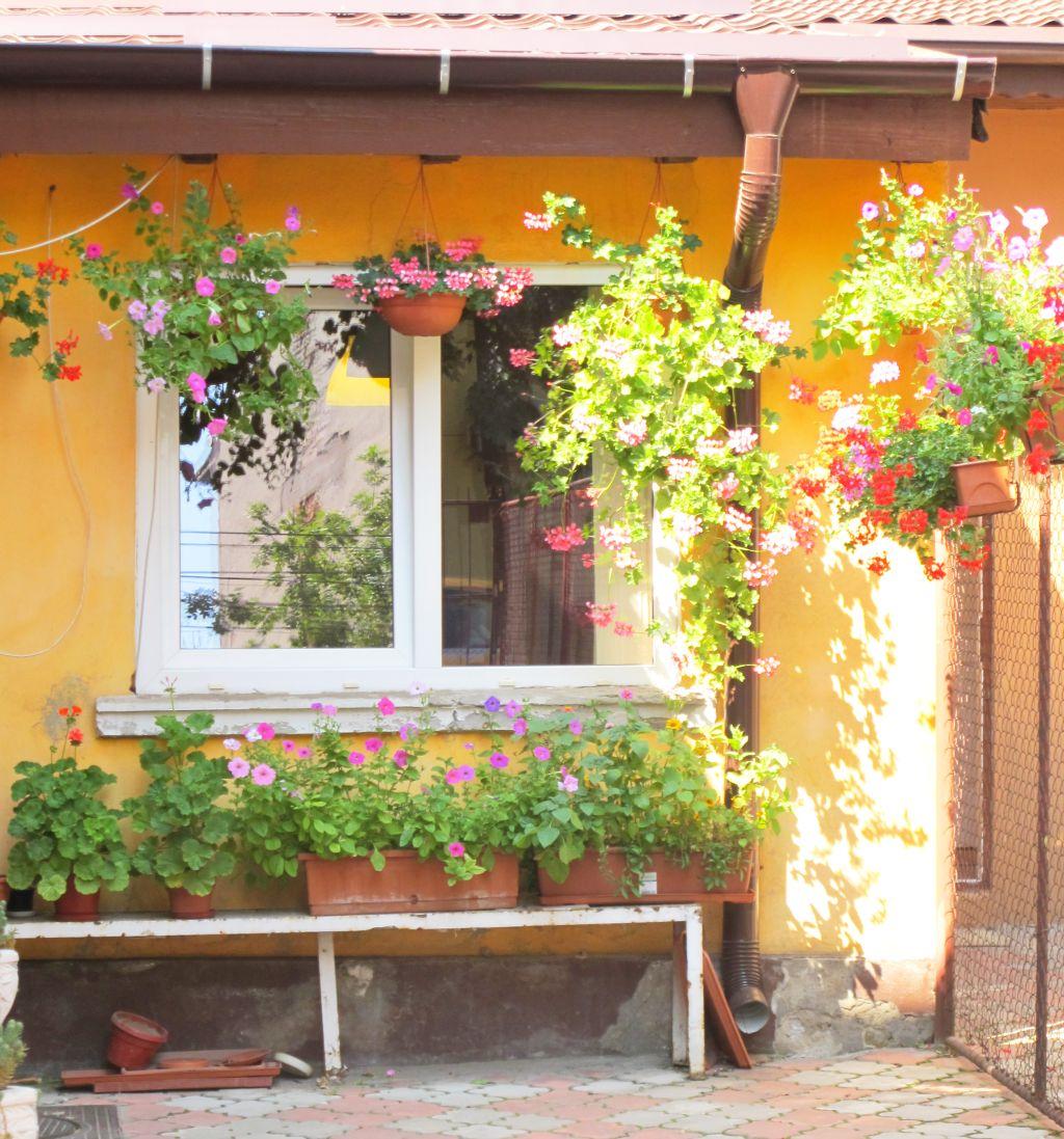 adelaparvu.com despre gradini urbane in Bucuresti 7