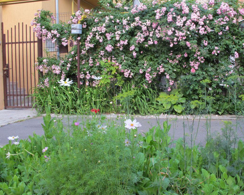 adelaparvu.com despre gradini urbane in Bucuresti 9