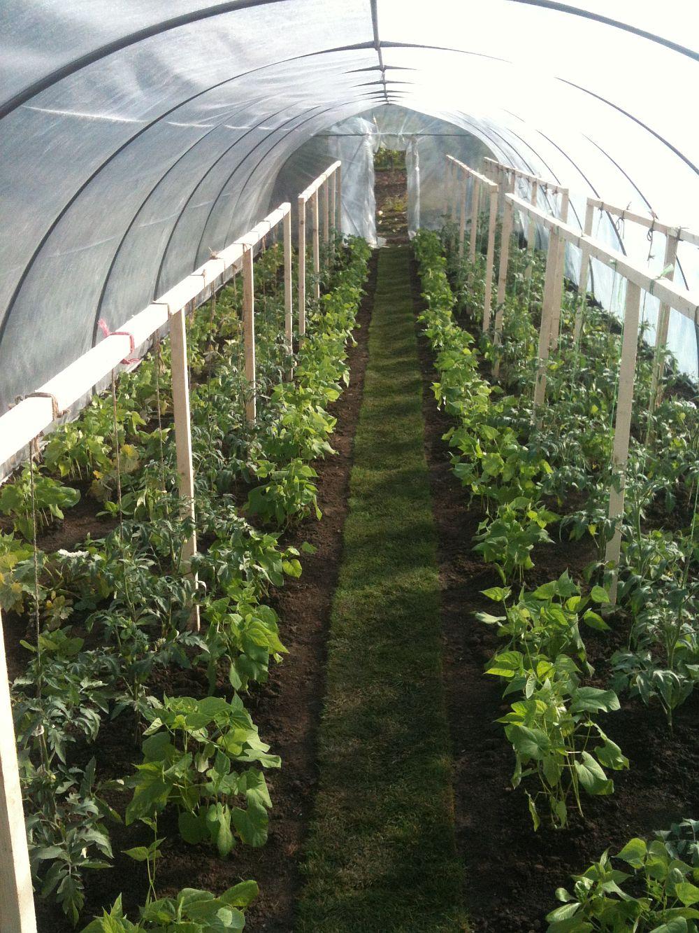 adelaparvu.com despre Verde Bun (2)