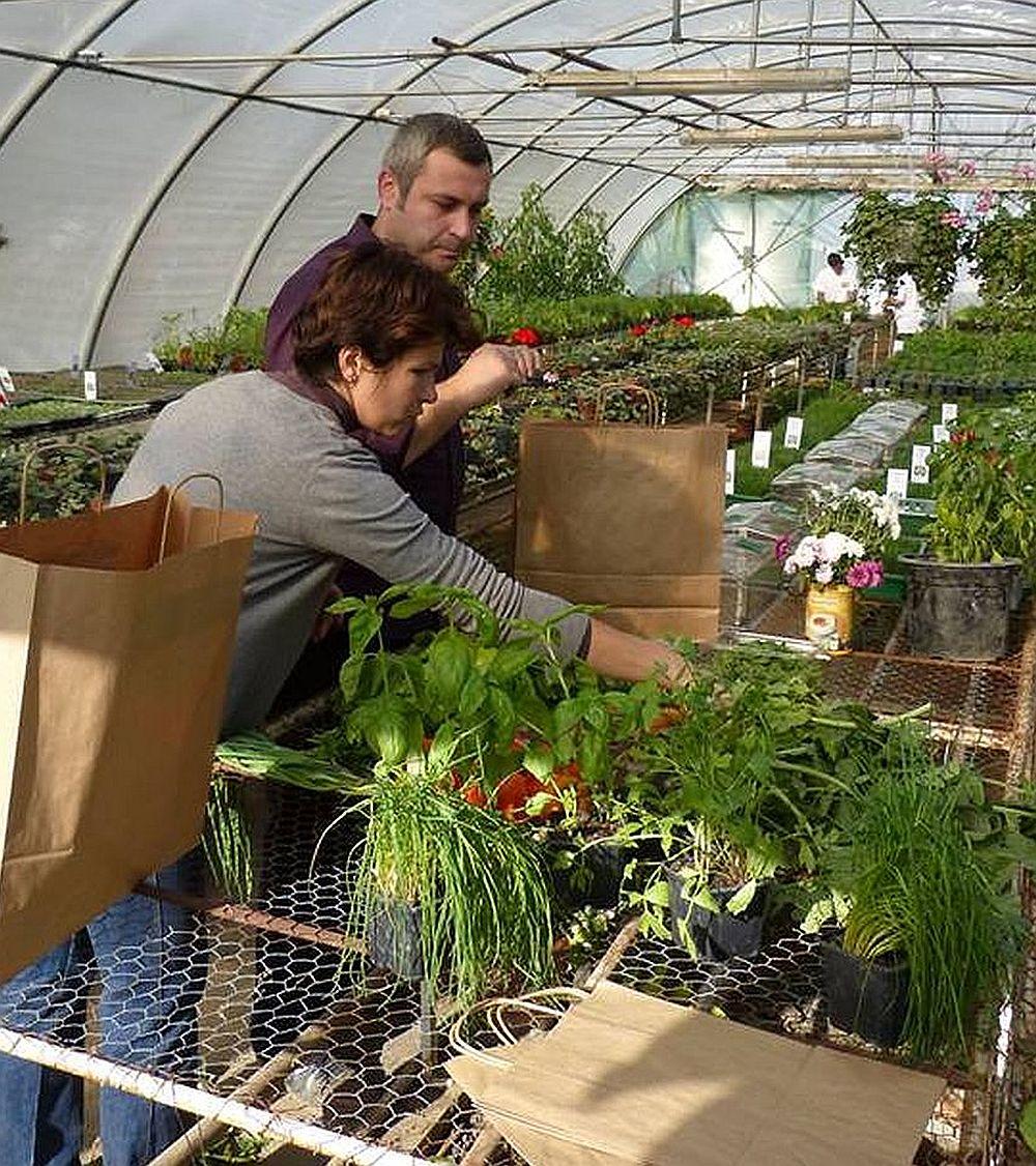 adelaparvu.com despre Verde Bun cultura de Ardei Familia Ivascu