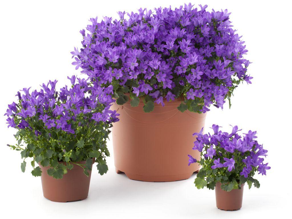 Locul 4 in top cele mai citite 10 articole despre plante si gradini 2013