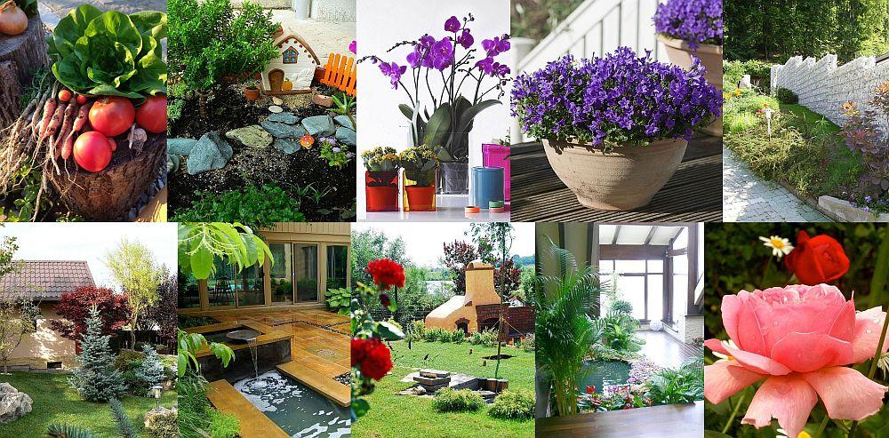 top 10 articole despre plante si gradini