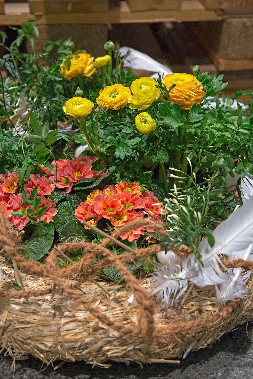 Ranunculus si Primula