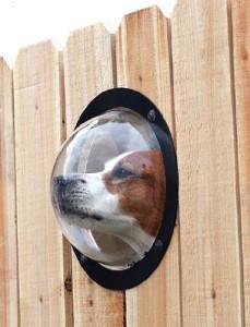 adelaparvu.com despre geam in gard pentru caini, PetPeek Fence Window, Foto Amazon (1)
