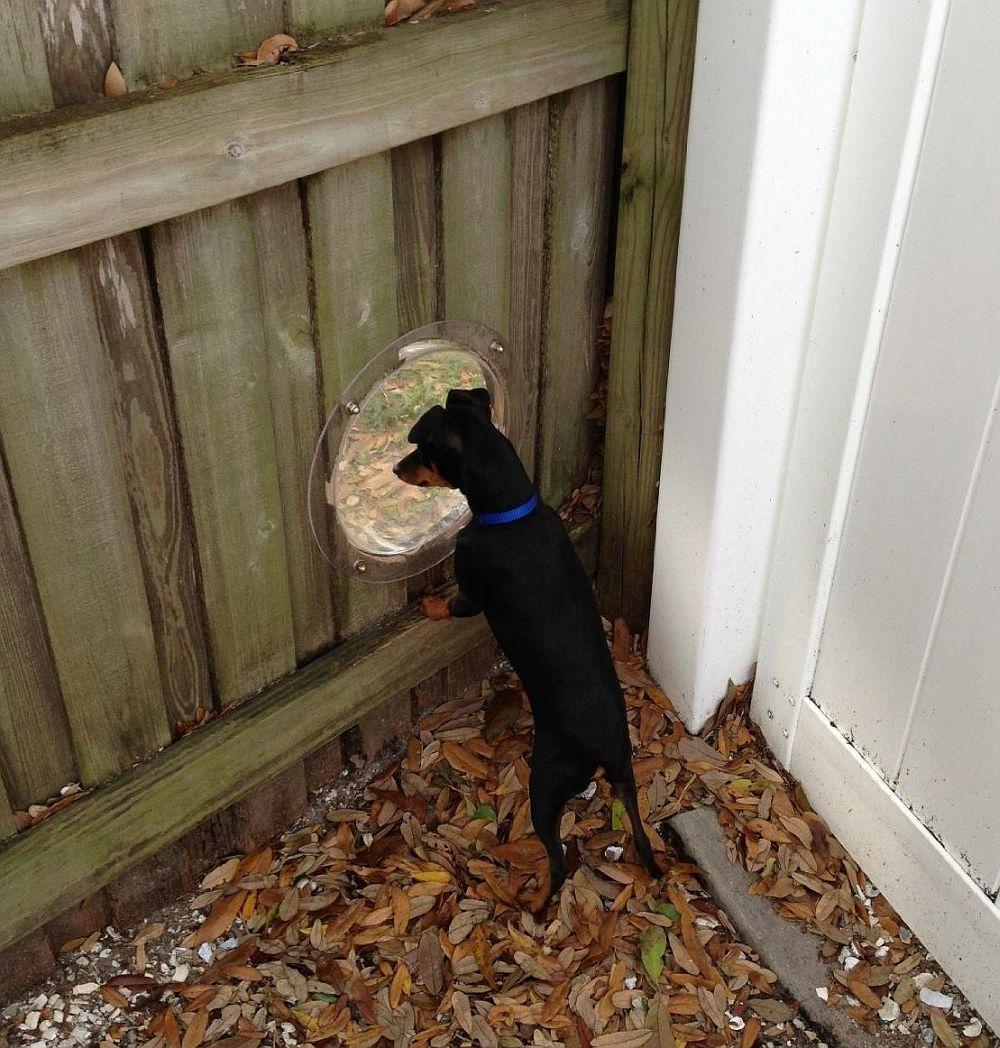 adelaparvu.com despre geam in gard pentru caini, PetPeek Fence Window, Foto Amazon (2)