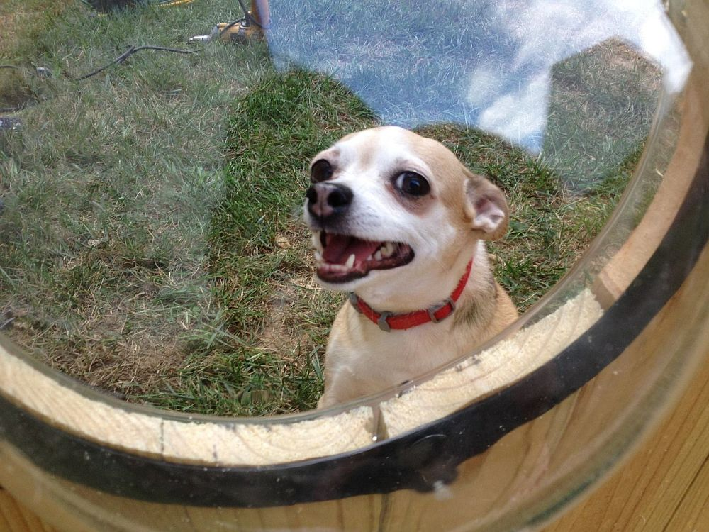 adelaparvu.com despre geam in gard pentru caini, PetPeek Fence Window, Foto Amazon (5)