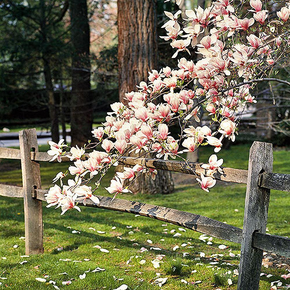 adelaparvu.com despre Magnolia, text Carli Marian (10)