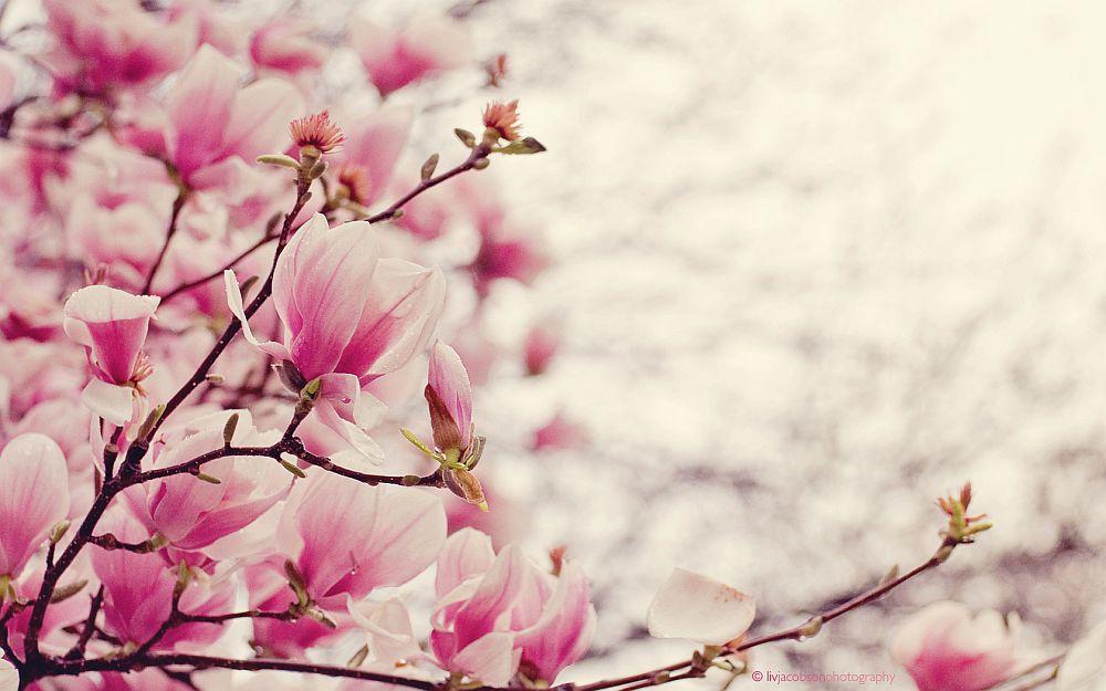 adelaparvu.com despre Magnolia, text Carli Marian (12)