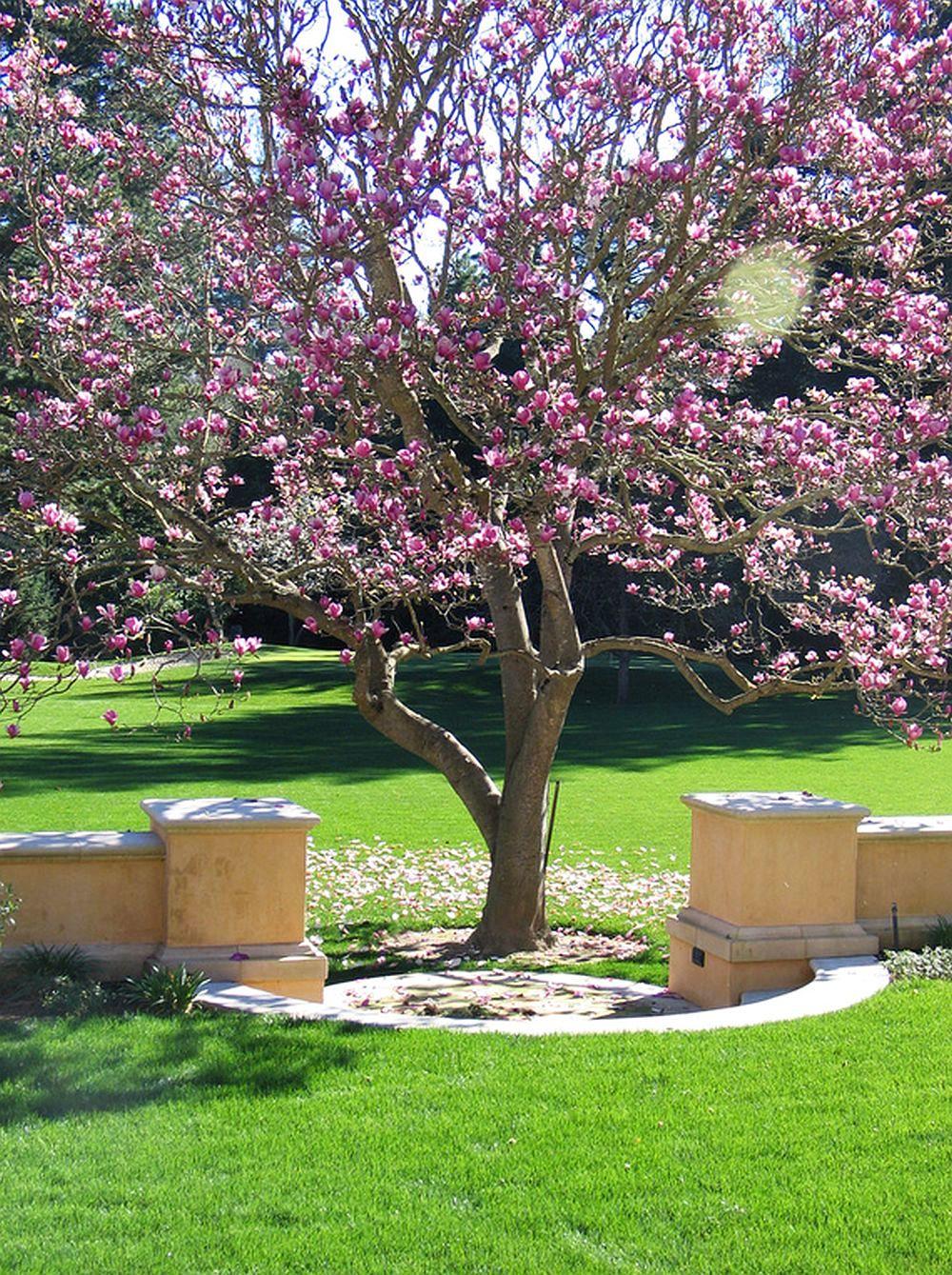 adelaparvu.com despre Magnolia, text Carli Marian (14)