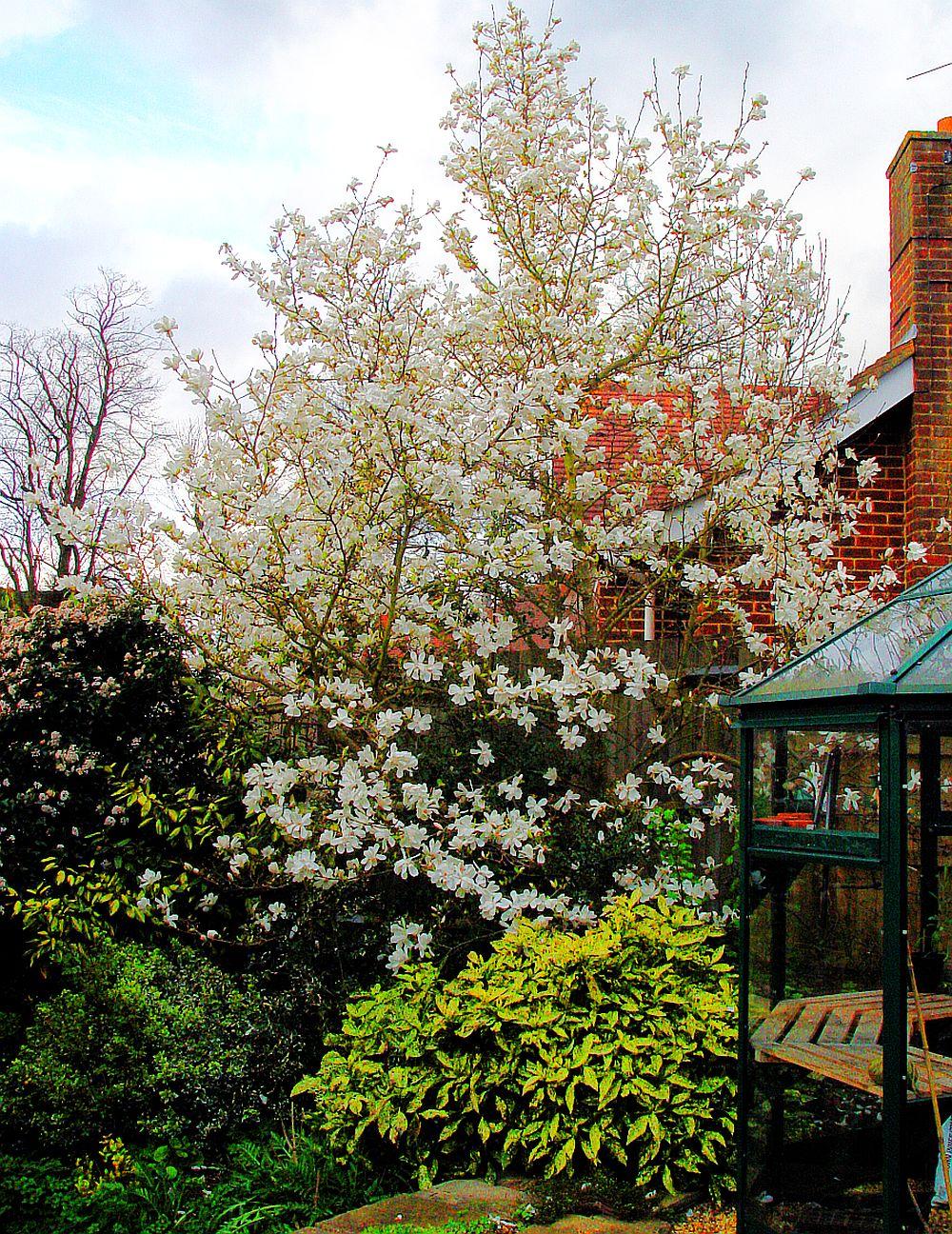 adelaparvu.com despre Magnolia, text Carli Marian (2)