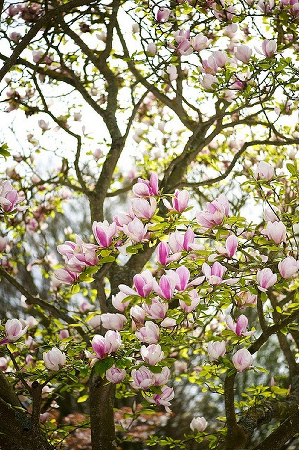 adelaparvu.com despre Magnolia, text Carli Marian (8)