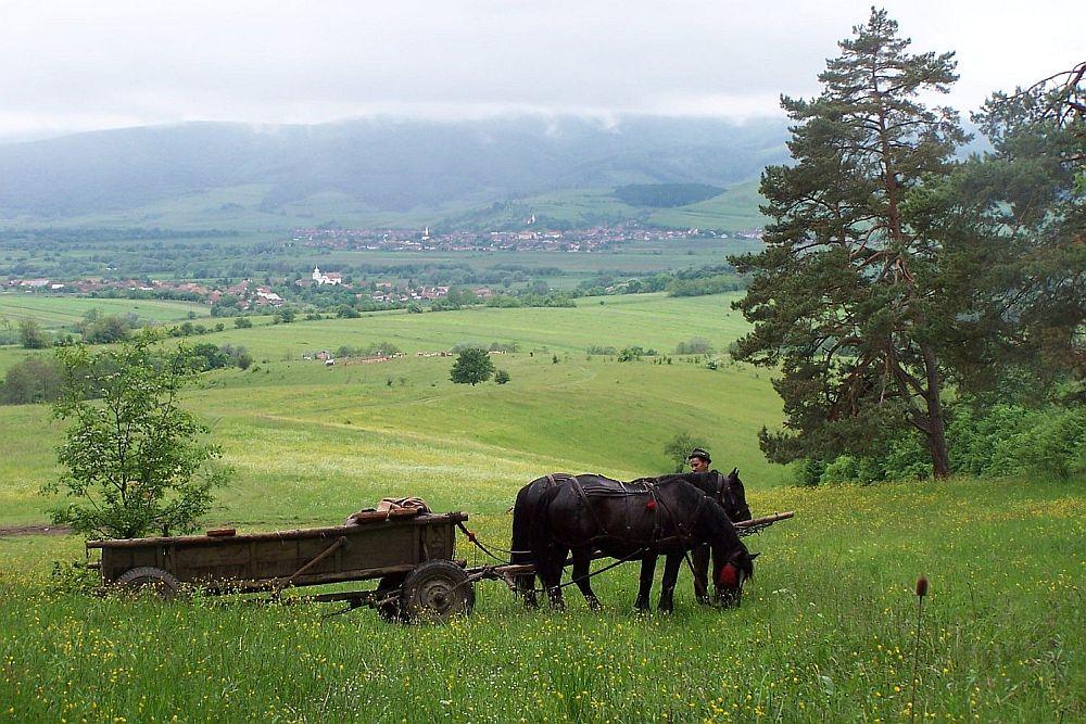 adelaparvu.com despre Pensiunea Miclosoara, Pensiunea Contelui Kálnoky, text Maria Baston (26)
