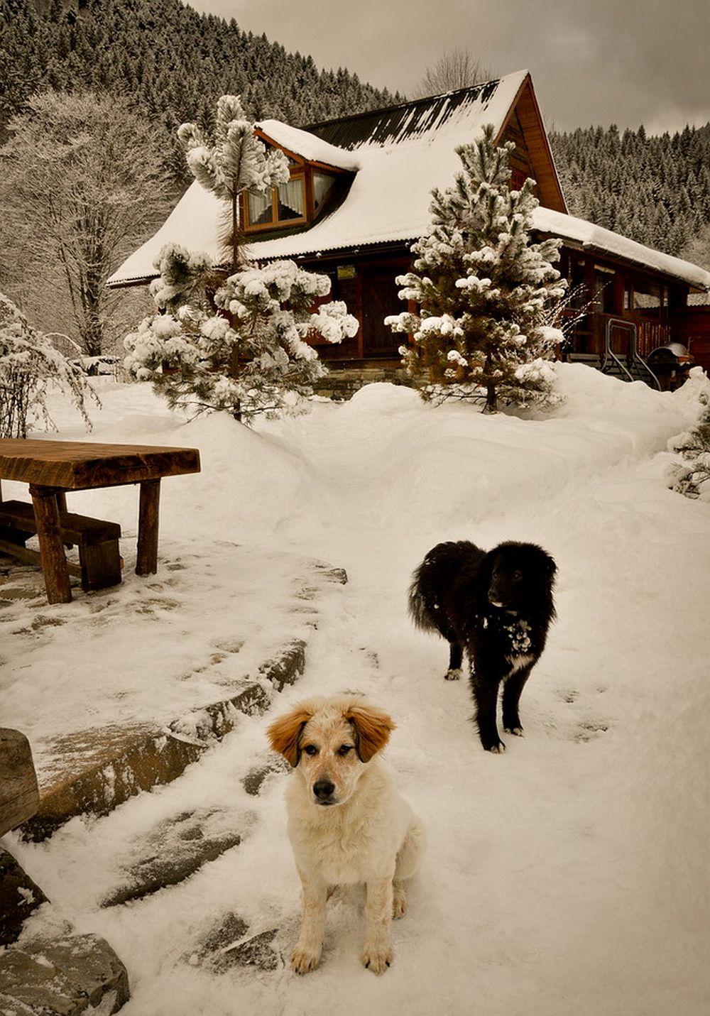 adelaparvu.com despre casa rustica cu gradina langa Piatra Neamt, peisaj de iarna, Foto Romulus Boicu  (6)