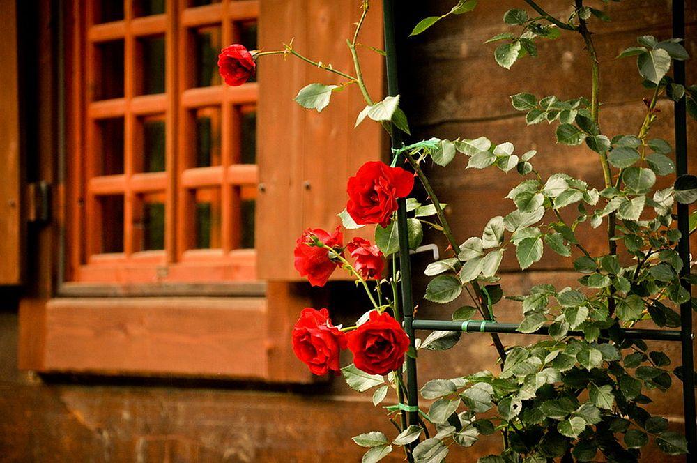 adelaparvu.com despre casa rustica cu gradina langa Piatra Neamt, peisaj de vara, Foto Romulus Boicu  (25)