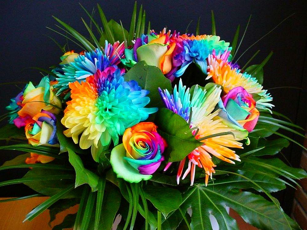 adelaparvu.com despre inventatorul Peter van de Werken, trandafiri curcubeu, flori curcubeu, Rainbowed Roses (7)