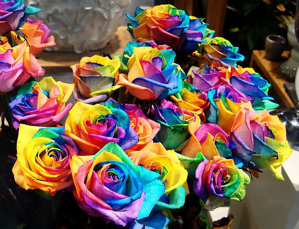 adelaparvu.com despre inventatorul Peter van de Werken, trandafiri curcubeu, flori curcubeu, Rainbowed Roses (8)