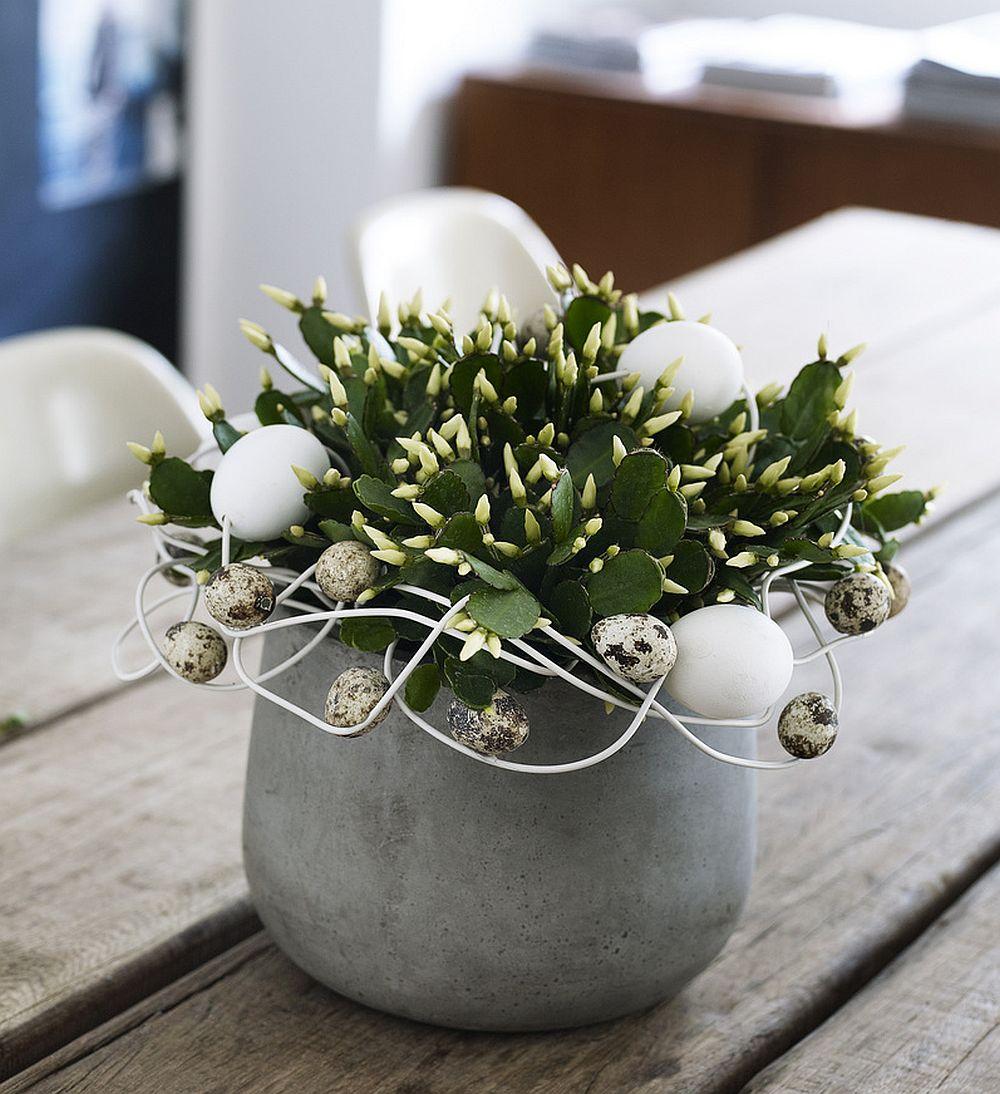 adelaparvu.com despre Florea Pastelui, Rhipsalidopsis, text Carli Marian, Foto Floradania (4)