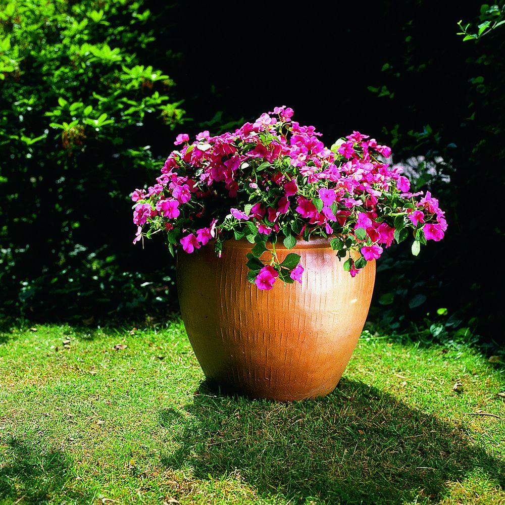 adelaparvu.com despre Sporul casei sau Impatiens, text Carli Marian, Foto Floradania (2)