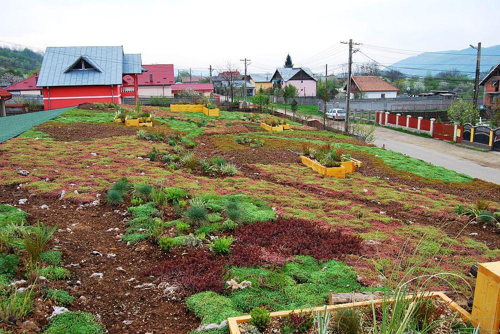 adelaparvu.com despre acoperis verde la Berca, gradina pe acoperis, design si executie Arta Gradinilor (6)