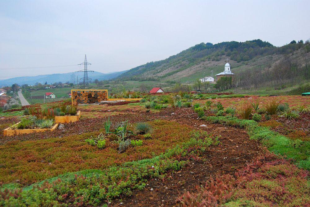 adelaparvu.com despre acoperis verde la Berca, gradina pe acoperis, design si executie Arta Gradinilor (8)