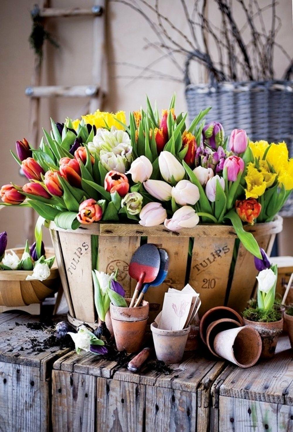 adelaparvu.com despre cum sa pastrezi mai mult timp lalelele in vaza (4)