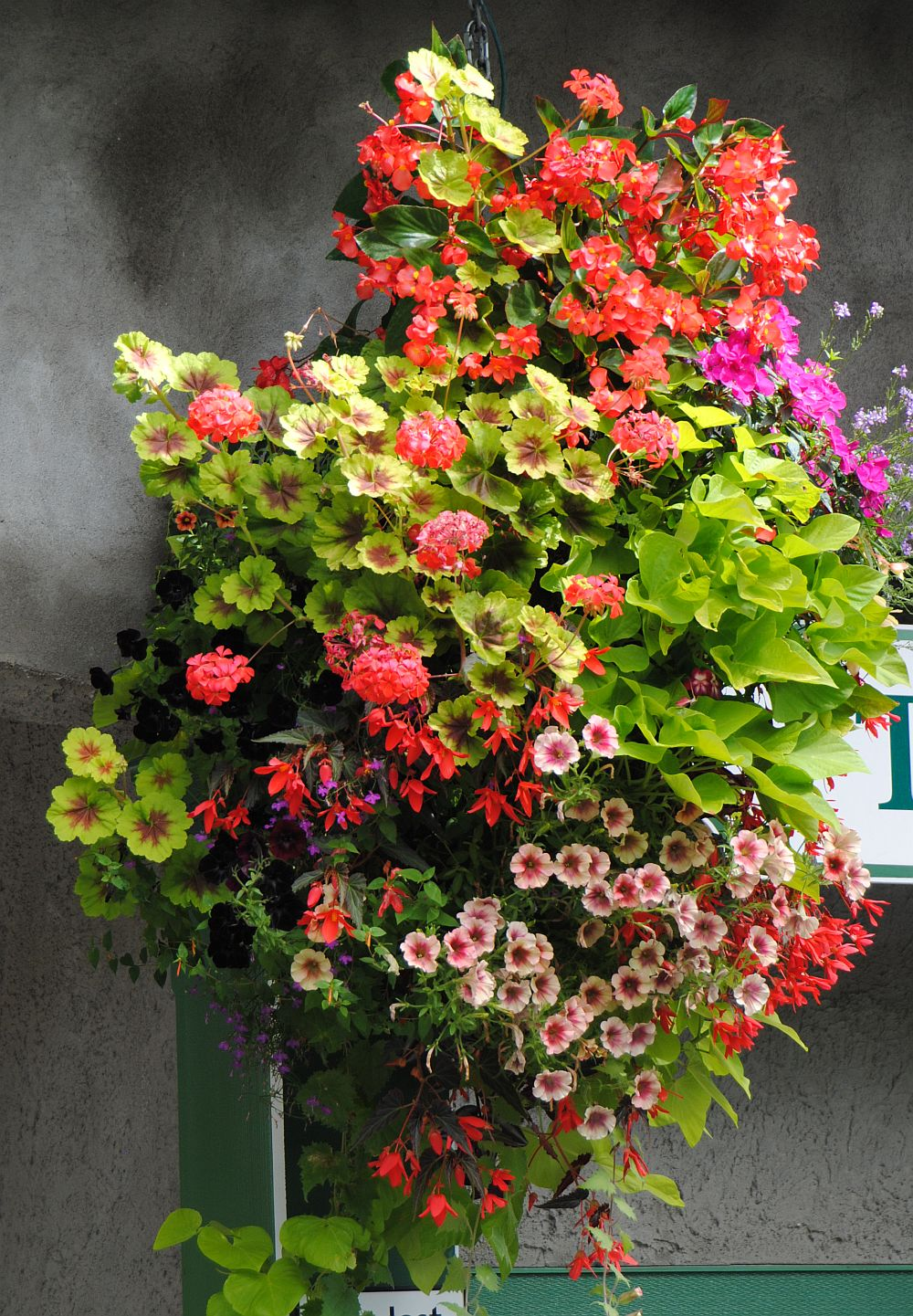 adelaparvu.com despre jardiniere cu flori multicolore, Text Carli Marian (3)