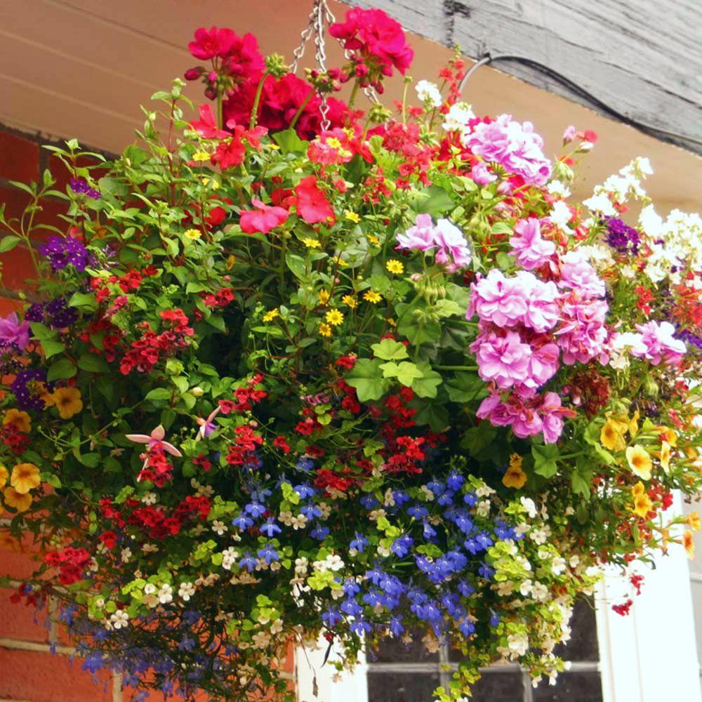 adelaparvu.com despre jardiniere cu flori multicolore, Text Carli Marian (5)