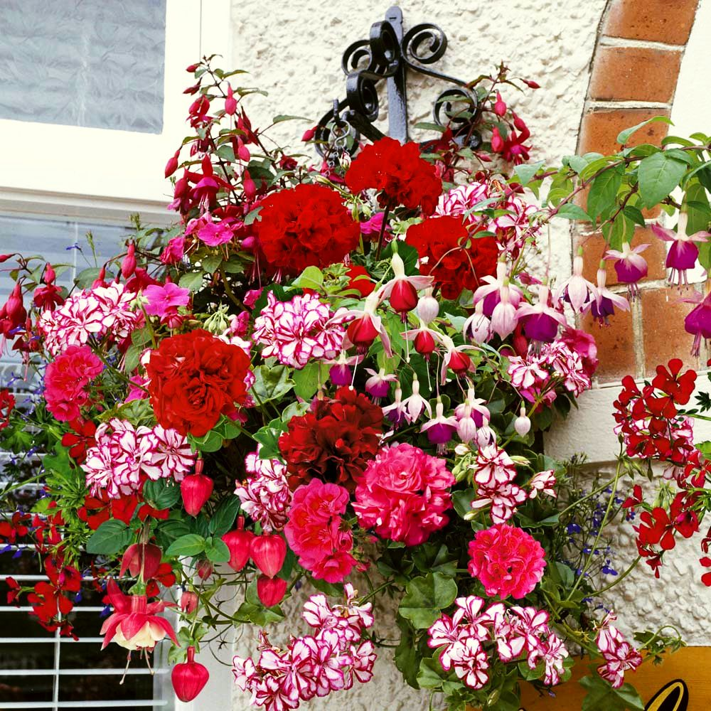 adelaparvu.com despre jardiniere cu flori multicolore, Text Carli Marian