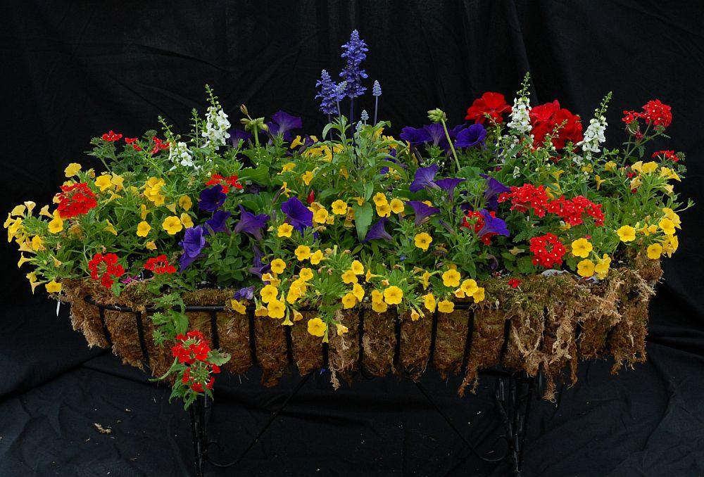 adelaparvu.com despre jardiniere cu flori multicolore, Text Carli Marian (7)