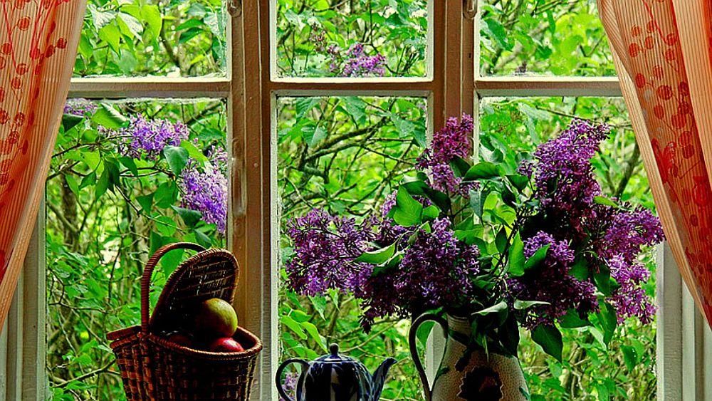 adelaparvu.com despre liliac, cum pastrezi liliacul mai mult timp in vaza, Text Carli Marian (11)