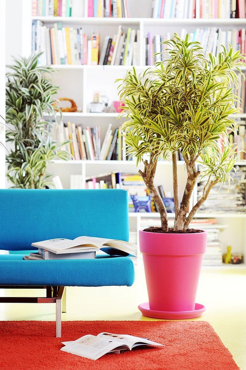 Plante care purifică aerul acasă. Despre asta îți vorbește ... Javadoplant