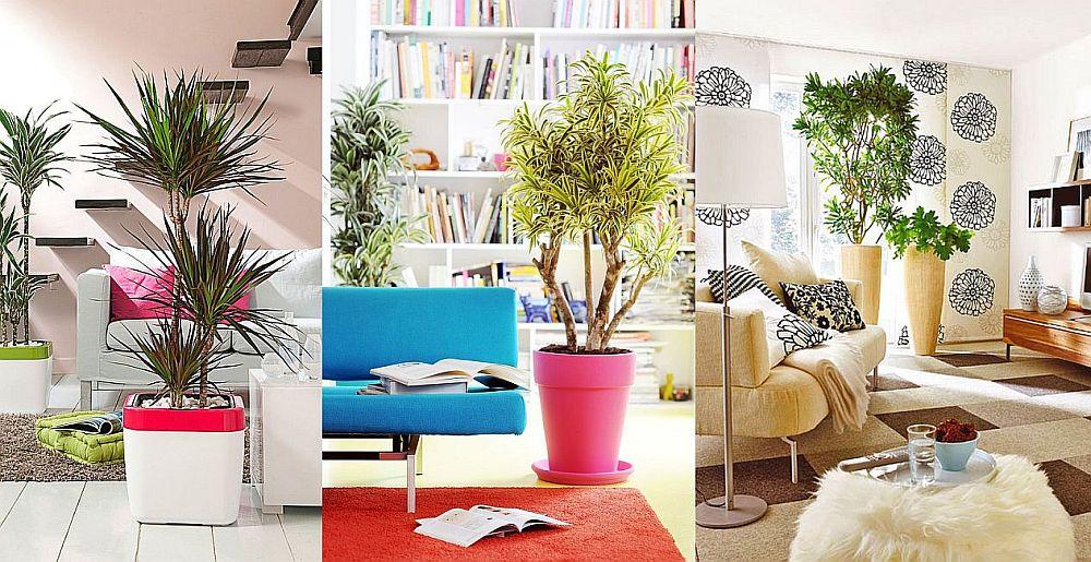 adelaparvu.com despre Carli Marian la TVH, plantele care purifica aerul de la interiorul casei
