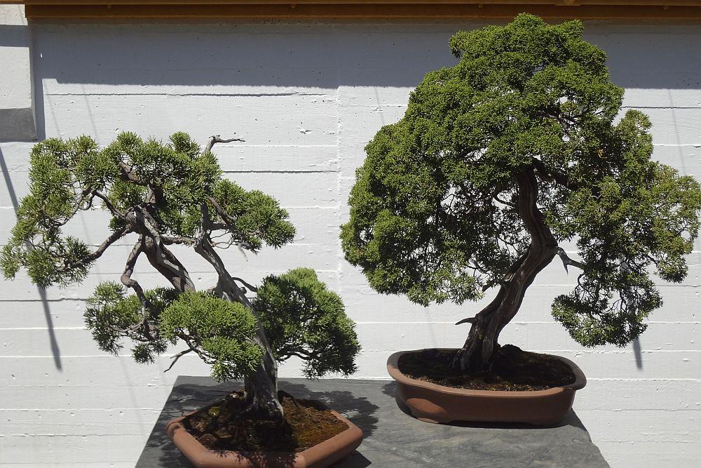 adelaparvu.com despre Muzeul Bosaiului Marbella, Bonsai Museum Spain, Text si foto Carli Marian (12)