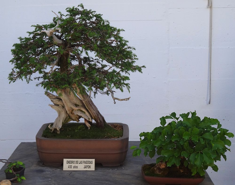 adelaparvu.com despre Muzeul Bosaiului Marbella, Bonsai Museum Spain, Text si foto Carli Marian (2)