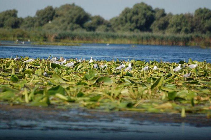 adelaparvu.com despre pensiune in Delta Dunarii, Pensiunea Doi Capitani, satul Crisan (3)