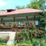 adelaparvu.com despre plante la ghiveci cu flori, plante traditionale romanesti, Text Carli Marian (15)