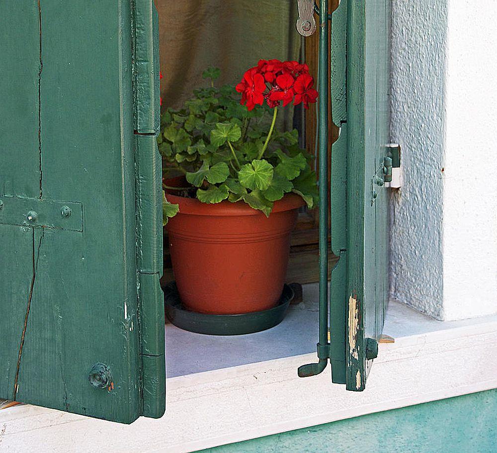 adelaparvu.com despre plante la ghiveci cu flori, plante traditionale romanesti, Text Carli Marian (16)