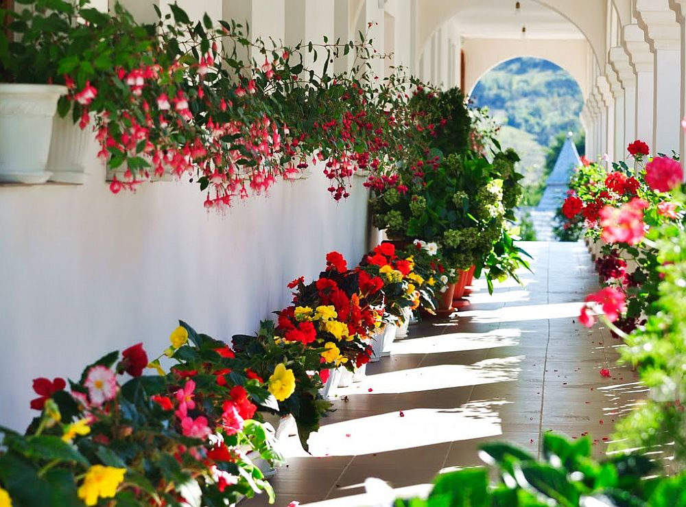 adelaparvu.com despre plante la ghiveci cu flori, plante traditionale romanesti, Text Carli Marian (2)