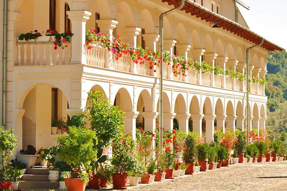 adelaparvu.com despre plante la ghiveci cu flori, plante traditionale romanesti, Text Carli Marian (3)