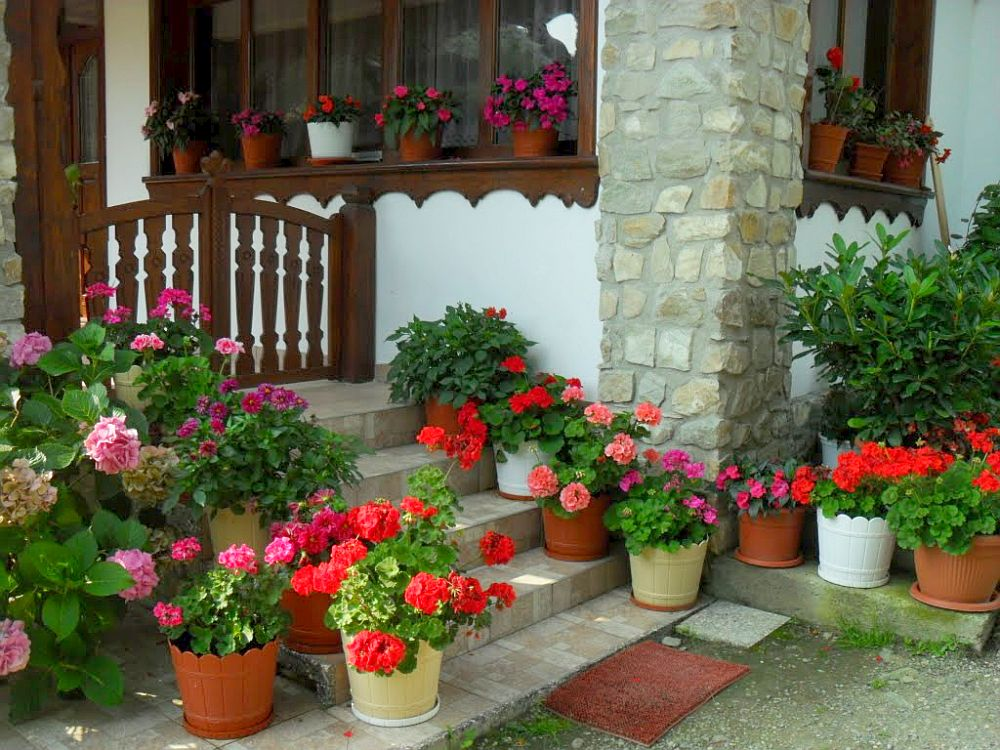 adelaparvu.com despre plante la ghiveci cu flori, plante traditionale romanesti, Text Carli Marian (4)