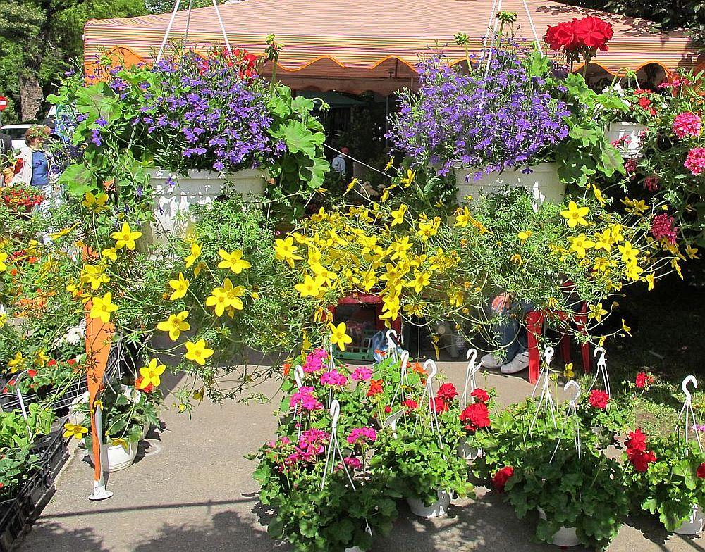 Stand Fabrica de Flori Natura