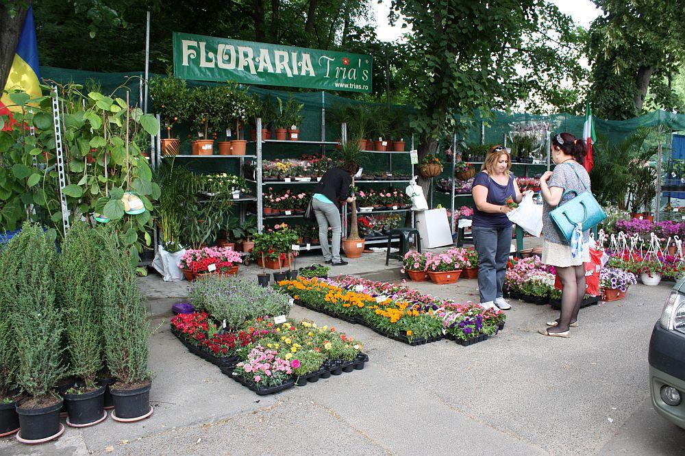 adelaparvu.com despre targul de plante, flori si peisagistica Hartus Florshow 2014 (12)