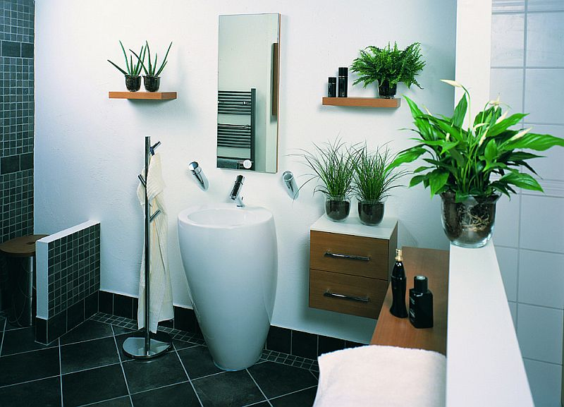 adelaparvu,com despre top 5 plante care absorb umiditatea din casa, Text Carli Marian, in foto Spathiphyllum (4)