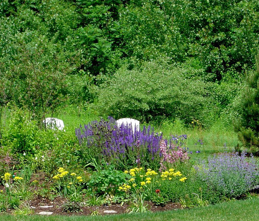 adelaparvu.com despre Allium ceapa decorativa, text Carli Marian, Allium moly
