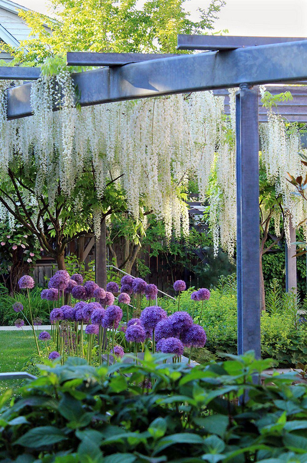 adelaparvu.com despre Allium ceapa decorativa, text Carli Marian, Foto AHBL
