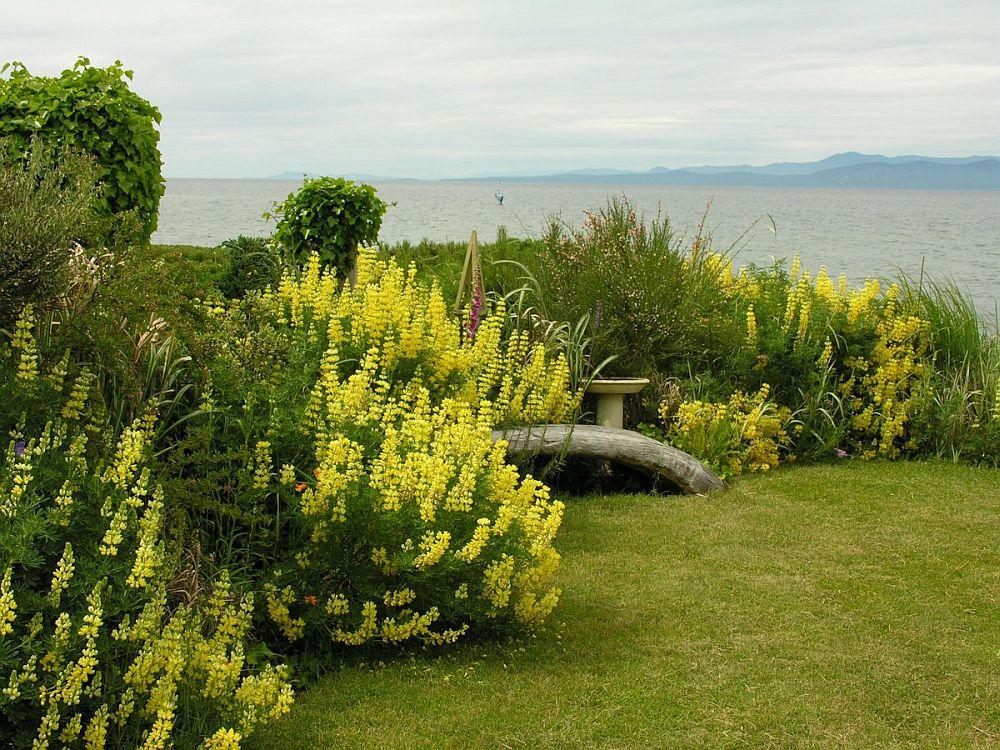 adelaparvu.com despre lupin, lupine, lupinus, flori pentru gradina, Text Carli Marian (8)