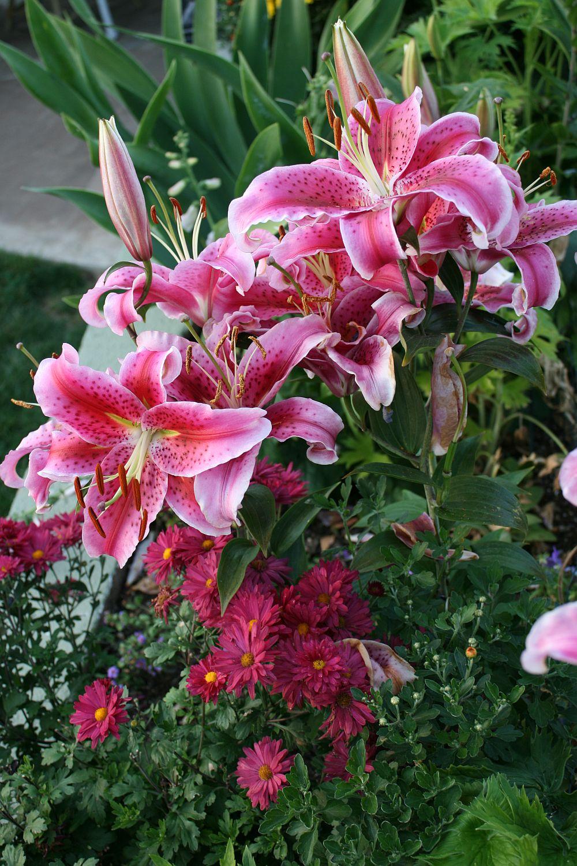adelaparvu.com despre plante cu flori mirositoare mai putin cunoscute, text Carli Marian, in foto Crin (2)